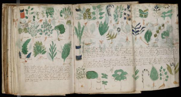 Páginas de la sección de 'farmacología' del manuscrito Voynich.