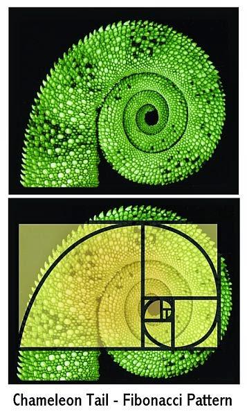 chameleon_fibonacci
